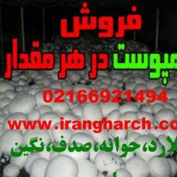 irangharch (35)