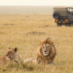 Male-and-female-lion-and-4x4-vechicle-on-tanzania-safari-vs-kenya