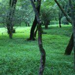 تور یکروزه جنگلهای سرسبز لاجیم