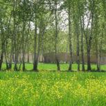 2050 متر باغ با جواز در زیبادشت