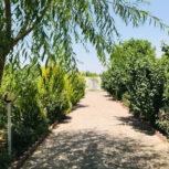 1462 متر باغ ویلا در شهریار