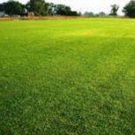 انواع بذر چمن سوپراسپرت هلندی،بذر چمن سوپراسپرت هلندی