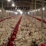 فروش مرغداری تخم گذار . گوشتی .مادر.مازندران